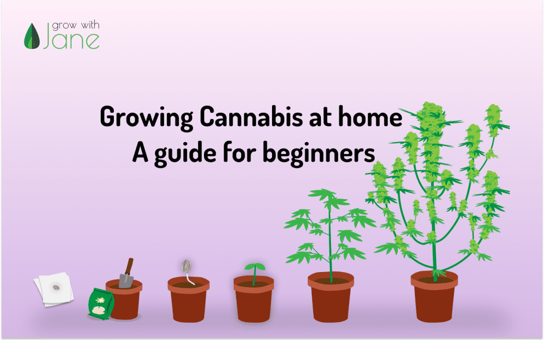 Growing Cannabis at home: a guide for beginners