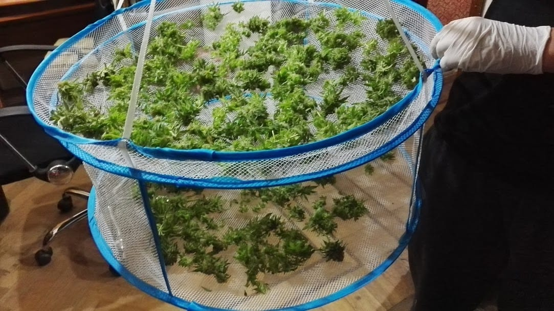 drying rack cannabis
