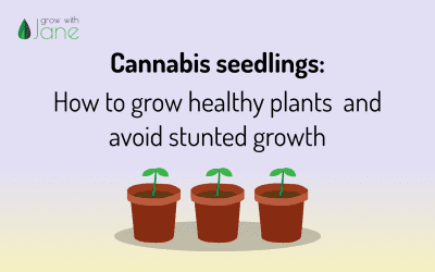 Cannabis seedlings – How to avoid stunted growth