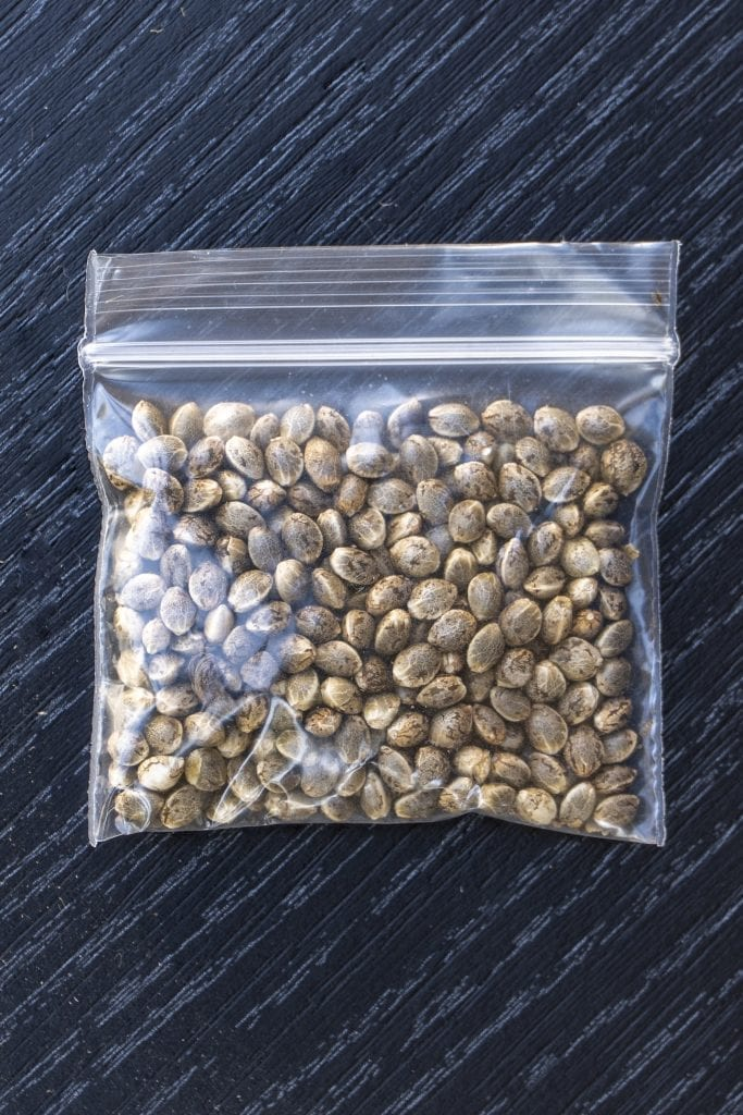 cannabis seeds sealed bag