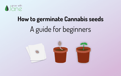 How to germinate Cannabis seeds: a guide for beginners