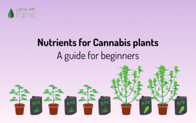 Nutrients for Cannabis plants: a guide for beginners